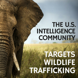 IC Targets Wildlife Traffickers