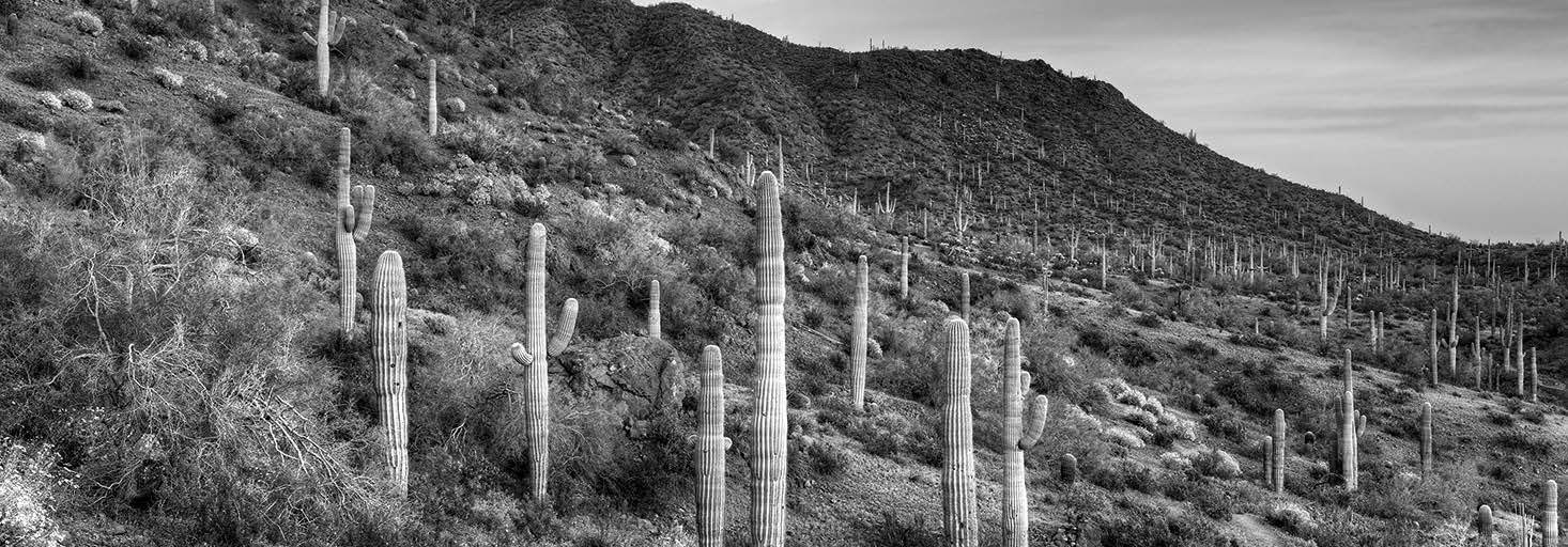 Cacti - Diverse plants adapt to a desert climate.